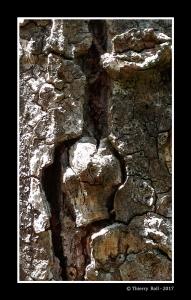 Sculpture-Naturelle
